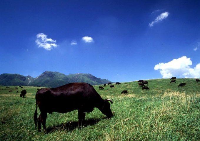 おおいた豊後牛「豊味(うま)いの証」