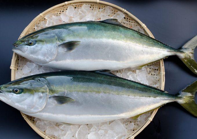 Kabosu-fed Japanese yellowtail (kabosu-buri)