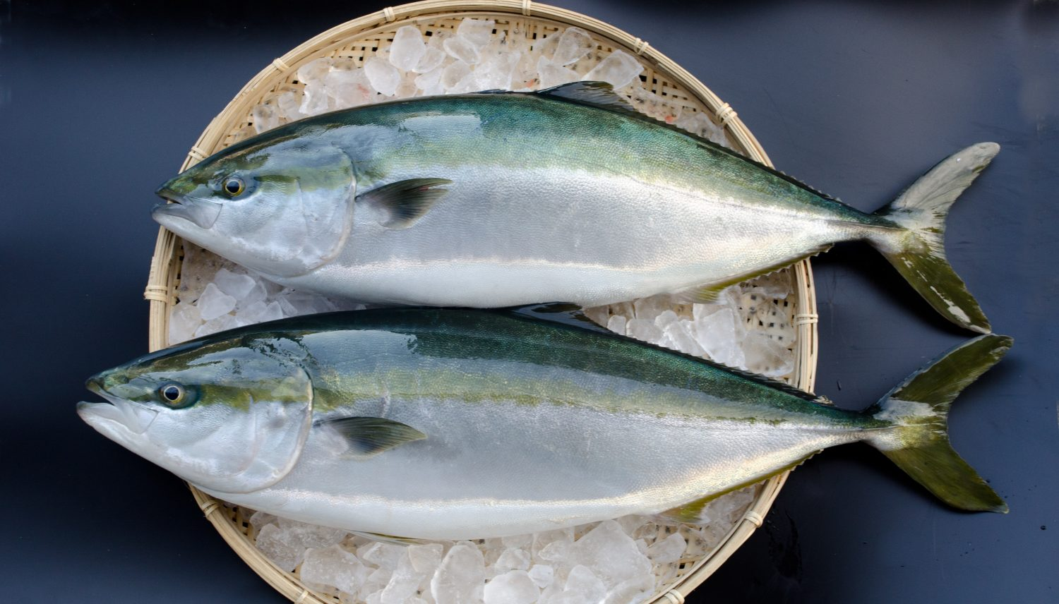 Kabosu-fed Japanese yellowtail (kabosu-buri)
