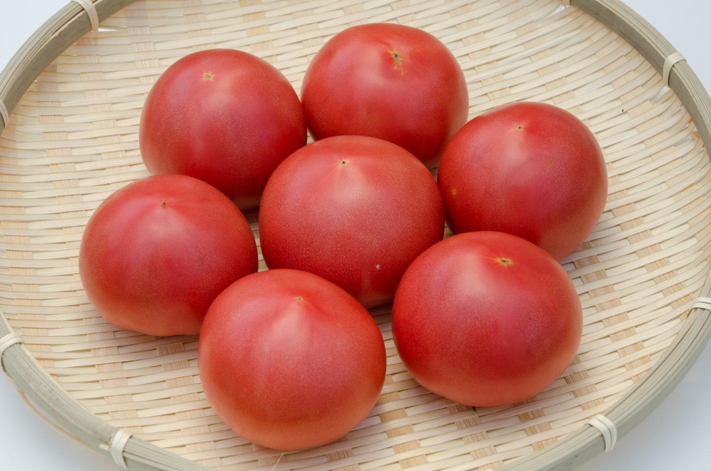 しゅんくる vol.28「赤採りトマト」