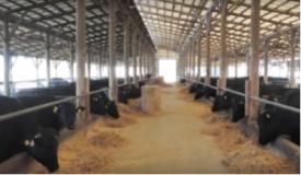 畜産農家の取組(豊後・米仕上牛、スプラウト牛)