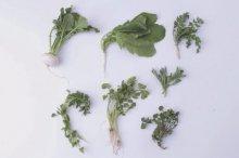 Seven herbs of spring(nana-kusa)