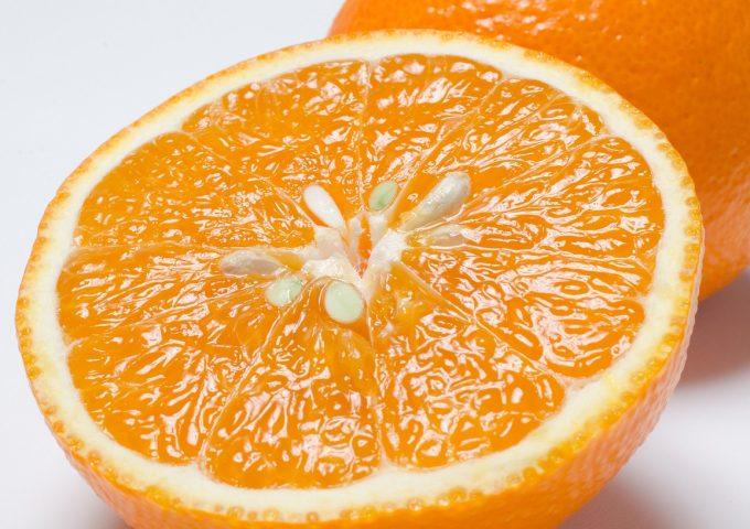 ゼリーオレンジ・サンセレブ