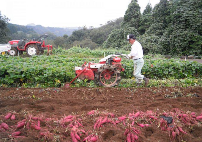 サツマイモの収穫♪