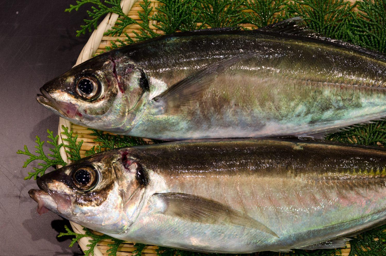 Horse-mackerel