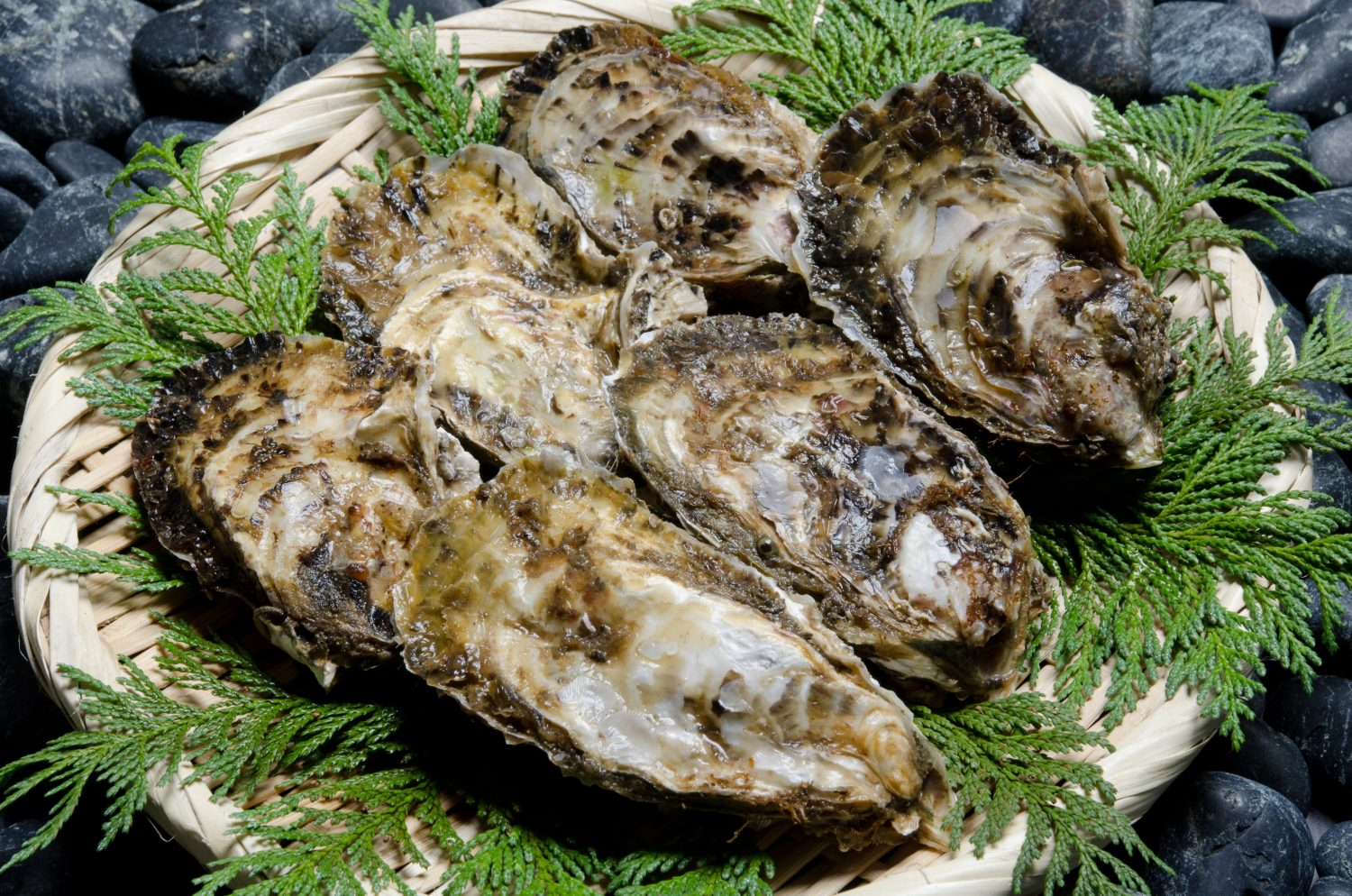 Oyster・Rock-oyster